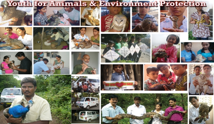Youth for Animals & Environment Protection